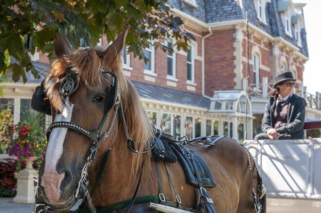 Un cheval tirant une calèche. Image d'illustration.